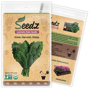 Seedz Organic Seed 1 Organic Kale Seeds, APPR. 550, Lacinato Kale, Heirloom Vegetable Seeds, Certified Organic, Non GMO, Non Hybrid, USA