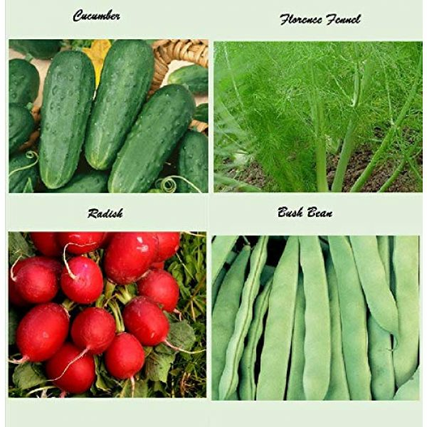 Apexmode Organic Seed 4 Set of 16 Assorted Organic Vegetable & Herb Seeds 16 Varieties Create a Deluxe Garden All Seeds are Heirloom, 100% Non-GMO Sweet Pepper Seeds, Hot Pepper Seeds-Red Onion Seeds- Green Onion Seeds
