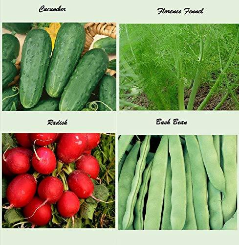 Apexmode  2 Set of 16 Assorted Organic Vegetable & Herb Seeds 16 Varieties Create a Deluxe Garden All Seeds are Heirloom
