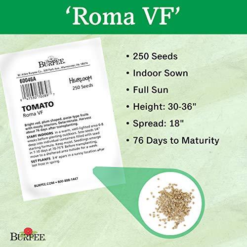 Burpee  3 Burpee 'Roma VF' Heirloom | Red Paste Tomato | 250 Seeds