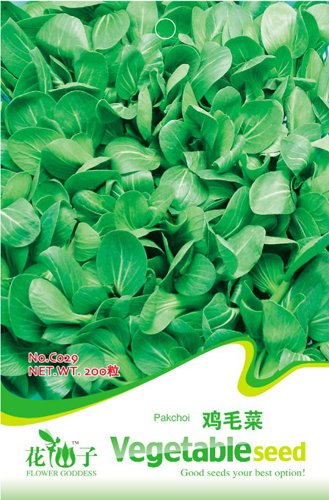 Business sasha  2 Each Pack 200+ Seeds Heirloom Healthy Organic Vegetable Chinese Cabbage Pakchoi Seeds (3)