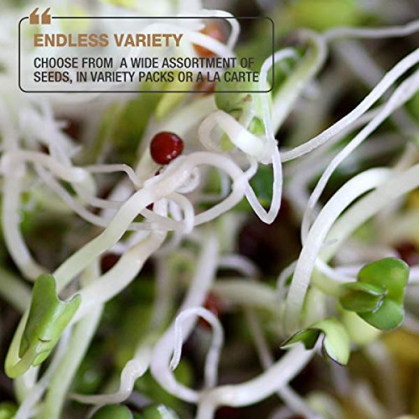 Masontops Organic Seed 6 Mumm's Sprouting Seeds - Classic Big Broccoli Sprouts - 200 GR - Sprout Your Own Organic Microgreens - Easy Sprouter Kit