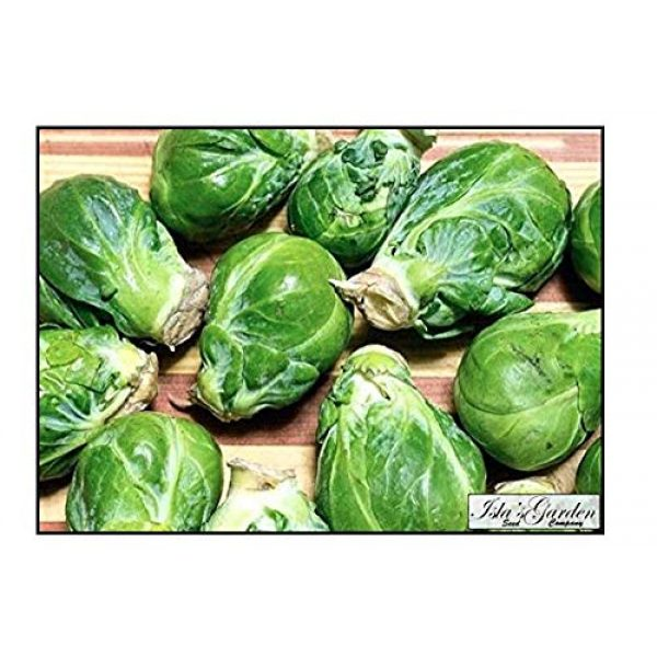 """Isla's Garden Seeds Organic Seed 1 """"Long Island Improved"""" Brussel Sprout Plant Seeds, 200+ Premium Heirloom Seeds, ON SALE!, (Isla's Garden Seeds), Non Gmo Organic, 99.7% Purity"""