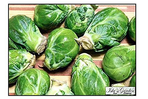 """Isla's Garden Seeds  1 """"Long Island Improved"""" Brussel Sprout Plant Seeds"""