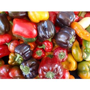 Ohio Heirloom Seeds Heirloom Seed 1 Sweet Pepper Seeds Assortment- 6 Varieties- Over 300 Seeds- All Non-GMO, Heirloom Varieties