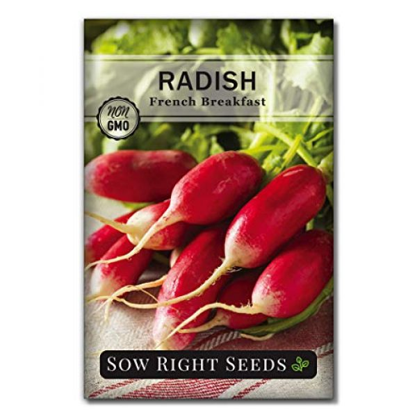Sow Right Seeds Heirloom Seed 4 Sow Right Seeds - Radish Seed Collection for Planting - Champion, Watermelon, French Breakfast, China Rose, and Minowase (Diakon) Varieties, Non-GMO Heirloom Seed to Plant Home Vegetable Garden