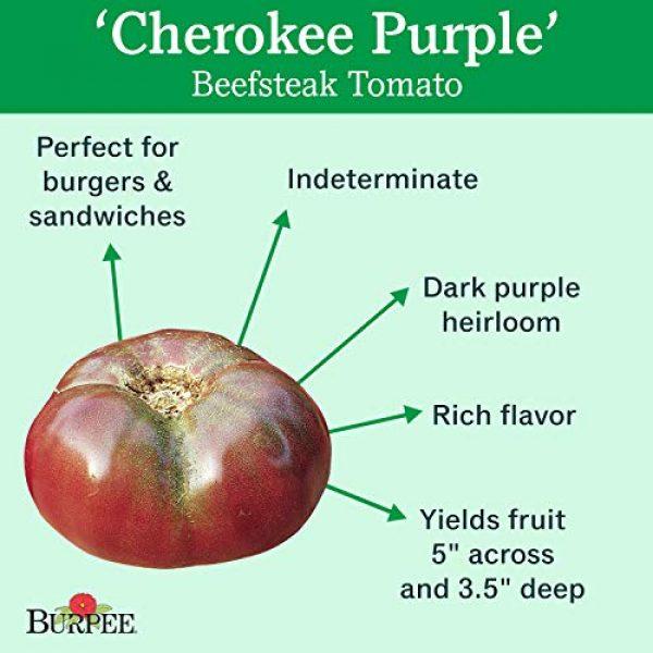 Burpee Heirloom Seed 2 Burpee Cherokee Purple' Heirloom Large Slicing Tomato Rich Flavor, 50 Seeds