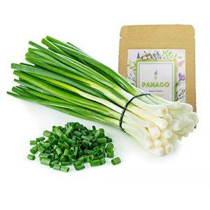 Panago Seeds Organic Seed 1 1300+ Long Green Scallion Seeds for Planting, Non-GMO Organic Heirloom Scallion Seeds