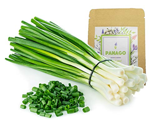 Panago Seeds  1 1300+ Long Green Scallion Seeds for Planting