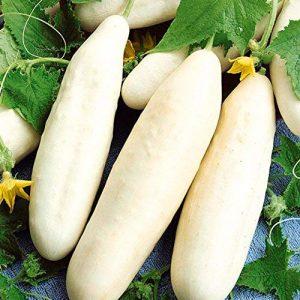Isla's Garden Seeds  1 Ivory White Wonder Cucumber Seeds - 100+ Premium Heirloom Seeds