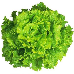 "Isla's Garden Seeds Organic Seed 1 ""Arianna Romaine"" Lettuce Seeds, 1000+ Premium Organic Heirloom Seeds, Batavian Lettuce, ON SALE!, (Isla's Garden Seeds), Non Gmo Survival Seeds, 99.7% Purity, 85% Germination, Highest Quality!"