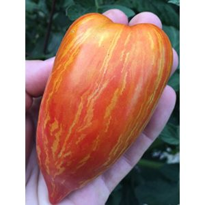 Sherwoods Seeds Heirloom Seed 1 Striped (Speckled) Roman Heirloom Tomato Premium Seed Packet