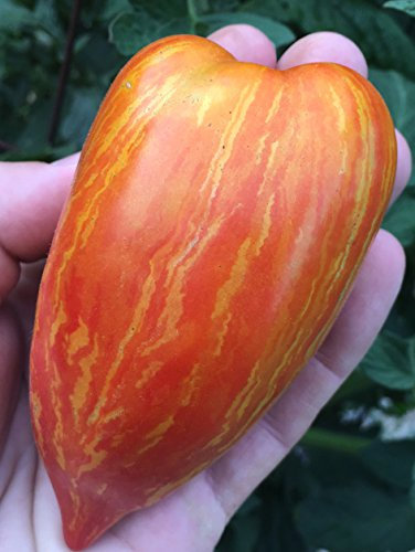 Sherwoods Seeds  1 Striped (Speckled) Roman Heirloom Tomato Premium Seed Packet