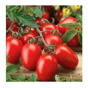 Isla's Garden Seeds Organic Seed 1 Organic Roma Tomato Seeds, 300+ Premium Heirloom Seeds!, 1 Selling Tomato Hot Pick & ON SALE!, (Isla's Garden Seeds), Non Gmo Organic, 85% Germination, Highest Quality Seeds, 100% Pure