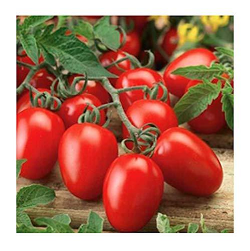Isla's Garden Seeds  1 Organic Roma Tomato Seeds