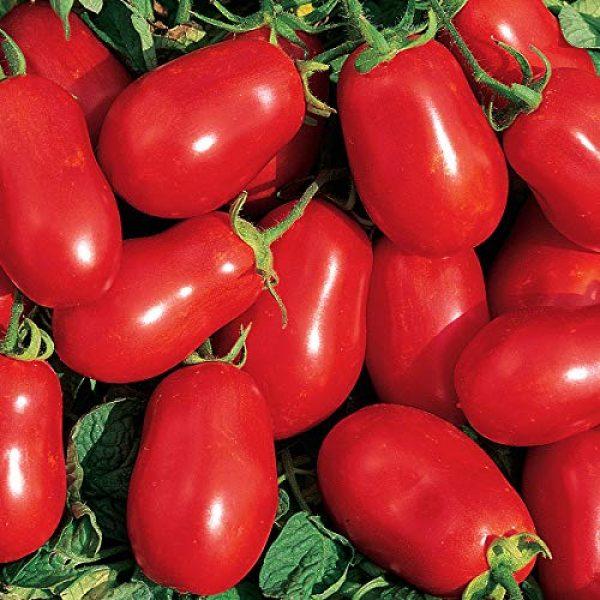 Burpee Heirloom Seed 1 Burpee 'Roma VF' Heirloom | Red Paste Tomato | 250 Seeds