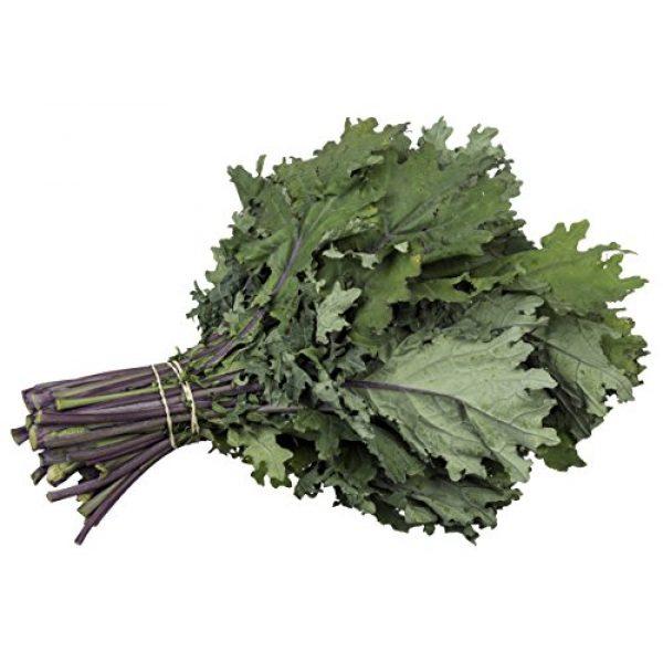 5GallonBucketHydro Organic Seed 1 Organic Kale Seeds - Red Russian Kale (150+ Seeds)