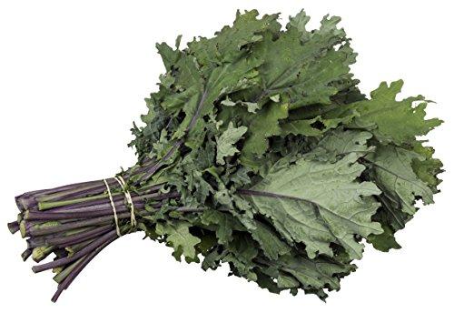 5GallonBucketHydro  1 Organic Kale Seeds - Red Russian Kale (150+ Seeds)