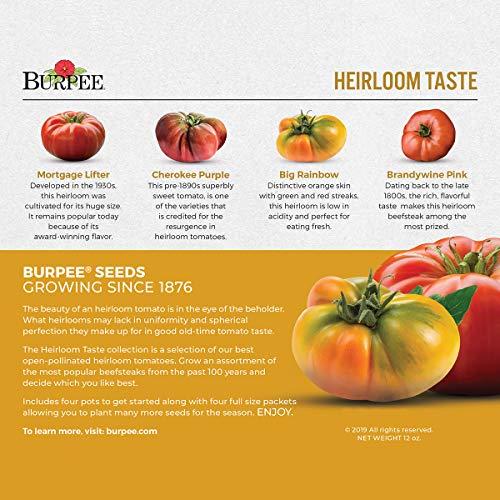 Big Rainbow & Brandywine Pink   4 Beefsteak Tomato Seed Packets