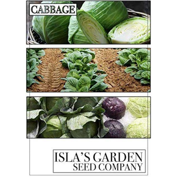 Isla's Garden Seeds Heirloom Seed 6 Golden Acre Cabbage Seeds, 500+ Premium Heirloom Seeds, Fantastic Addition to Your Home Garden! Fresh & Crisp!, (Isla's Garden Seeds), Non GMO, 85% Germination Rates, Highest Quality Seeds
