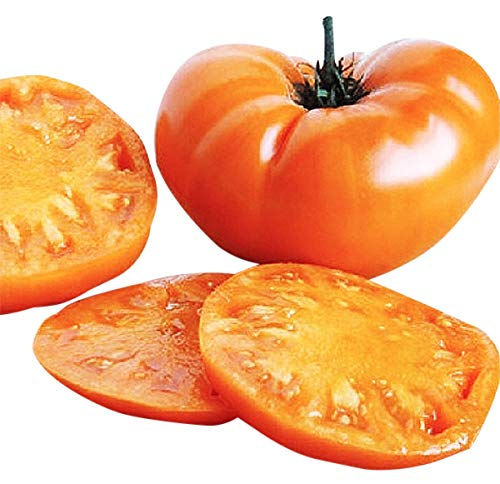 Marde Ross & Company  1 Organic Kellogg Orange Breakfast Heirloom Tomato Seeds - Large Tomato - One of The Most Delicious Tomatoes for Home Growing