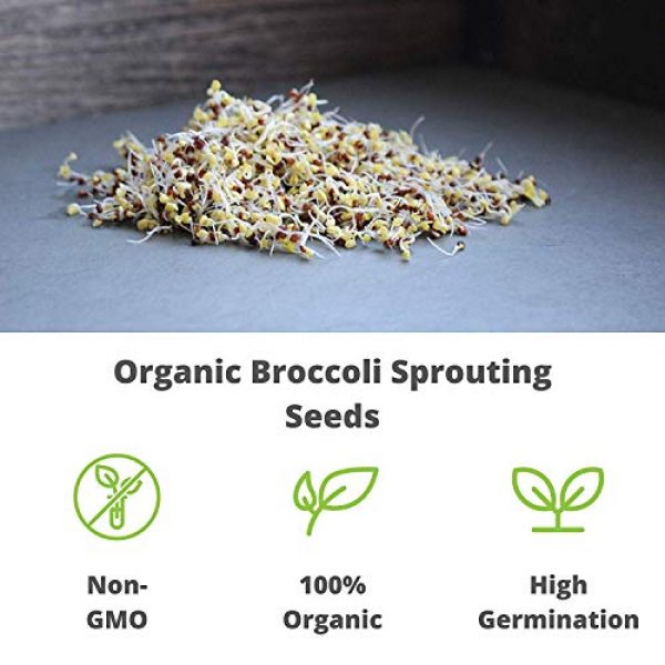 Handy Pantry Organic Seed 7 Organic Broccoli Sprouting Seeds By Handy Pantry | 8 oz. Resealable Bag | Non-GMO Broccoli Sprouts Seeds, Contains Sulforaphane