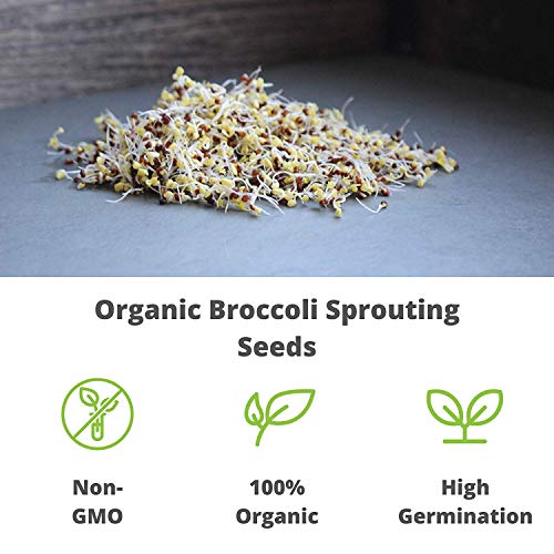 Handy Pantry  4 Organic Broccoli Sprouting Seeds By Handy Pantry | 8 oz. Resealable Bag | Non-GMO Broccoli Sprouts Seeds