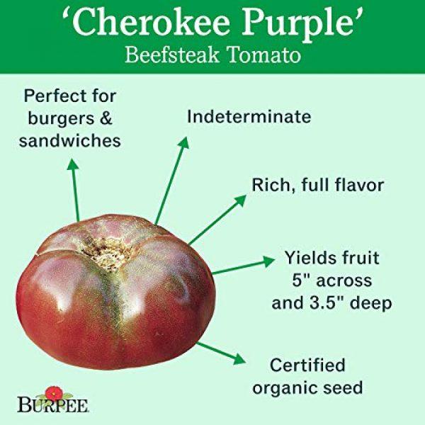 Burpee Organic Seed 2 Burpee 'Cherokee Purple' Heirloom | Large Purple Slicing Tomato | Rich Flavor | 50 Seeds
