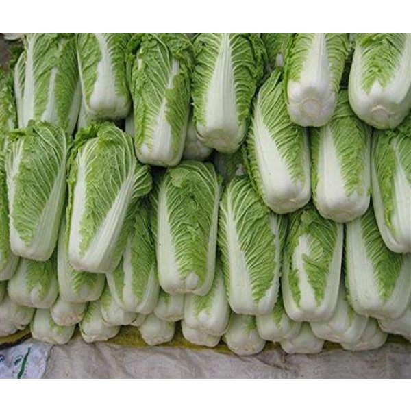 Kuting Organic Seed 5 Cabbage Seeds 10g Garden Vegetable Big Small White Green Red Organic Chinese Flowering Cuisine Cabbage for Planting Outside Door for Cooking Dish Soup Taste Good Delicious (No.3 Cabbage Seeds)