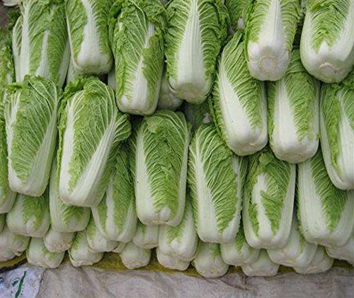 Kuting  5 Cabbage Seeds 10g Garden Vegetable Big Small White Green Red Organic Chinese Flowering Cuisine Cabbage for Planting Outside Door for Cooking Dish Soup Taste Good Delicious (No.3 Cabbage Seeds)