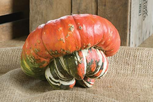 David's Garden Seeds  1 David's Garden Seeds Gourd Turk's Turban 4554 (Multi) 25 Non-GMO