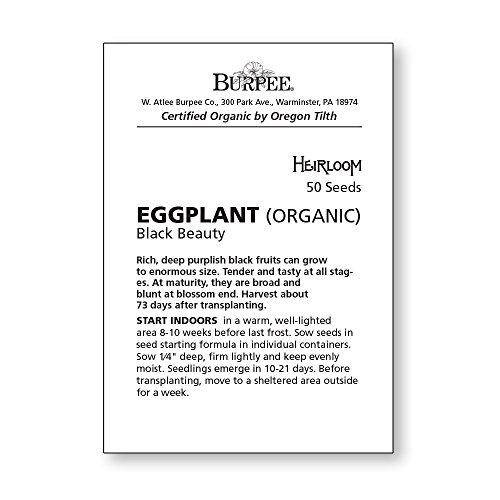 Burpee  4 Burpee Black Beauty (Organic) (Heirloom) Eggplant Seeds 50 seeds