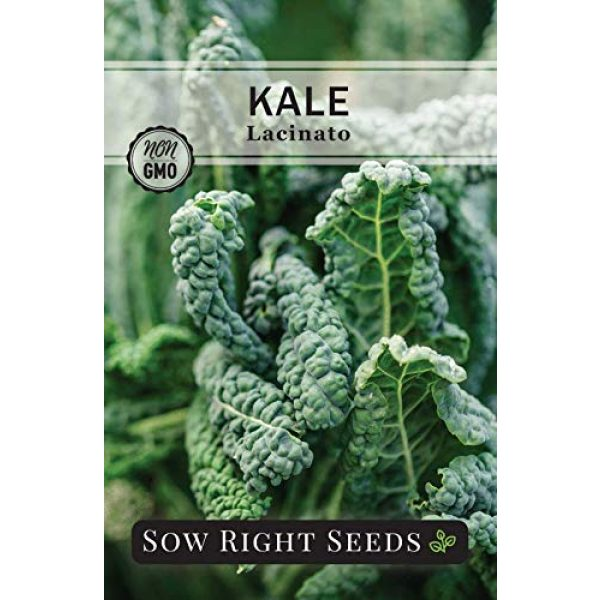 Sow Right Seeds Heirloom Seed 2 Sow Right Seeds - Kale Seed Collection for Planting - Non-GMO Heirloom Packet with Instructions to Plant and Grow a Home Vegetable Garden, Great Gardening Gift