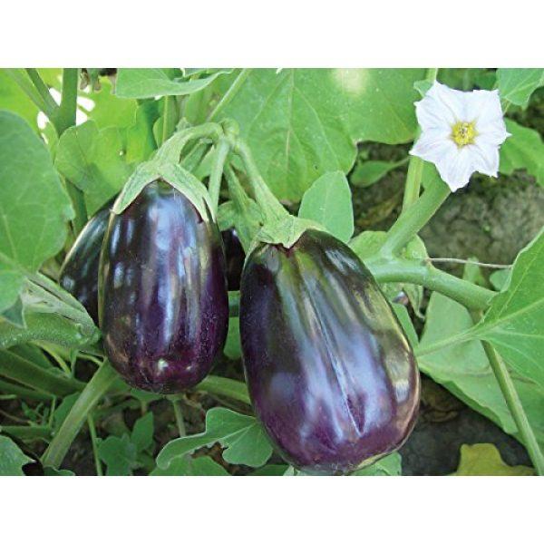 Burpee Heirloom Seed 2 Burpee Black Beauty Eggplant Seeds 100 seeds