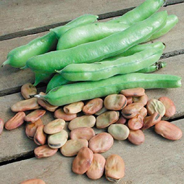 Isla's Garden Seeds Organic Seed 1 Fava Broad Windsor Seeds, 20 Premium Heirloom Seeds, Top selling popular choice, ON SALE!, (Isla's Garden Seeds), Non Gmo Organic Survival Seeds, Highest Quality!