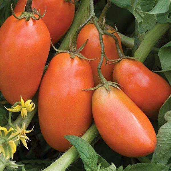 Burpee Heirloom Seed 1 Burpee San Marzano' Heirloom Paste Tomato, 75 seeds
