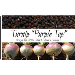 Liliana's Garden  1 Liliana's Garden Turnip Seeds - Purple Top