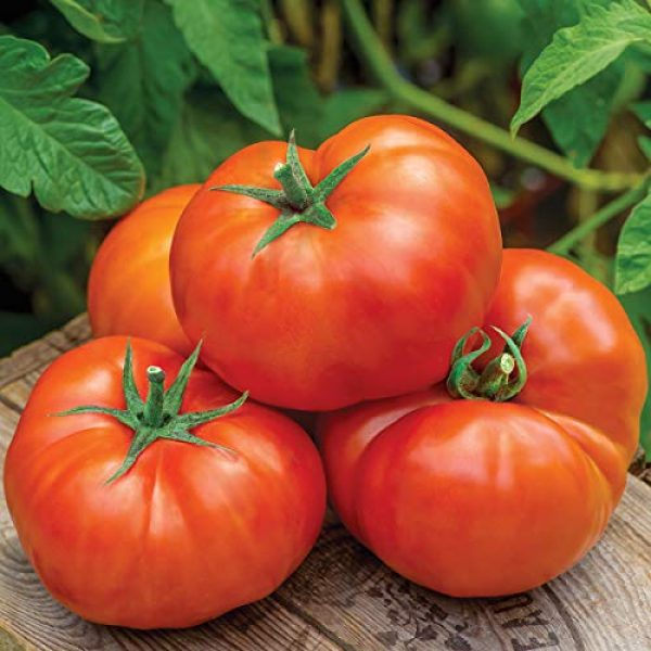 Burpee Heirloom Seed 1 Burpee 'Jersey Boy' Hybrid | Beefsteak Slicing Tomato | Heirloom Flavor | 25 Seeds