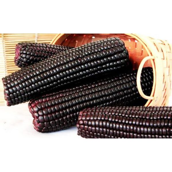 Kuting Organic Seed 2 Corn Seeds 30g Sweet Black Giant Waxy Sticky Corn Survival Garden Vegetable Organic Chinese Fresh Fruit Seeds for Planting Outdoor for Cooking Soup Salad Juice Taste Sweet Delicious(Black Corn Seeds)