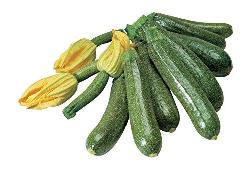 Burpee  1 Burpee Fordhook Zucchini Summer Squash Seeds 50 seeds