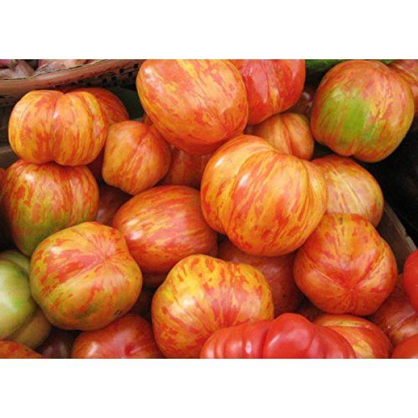 David's Garden Seeds Heirloom Seed 1 David's Garden Seeds Tomato Slicing Tigerella 2153 (Red) 50 Non-GMO, Heirloom Seeds