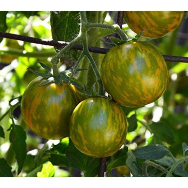 Isla's Garden Seeds Heirloom Seed 2 Green Zebra Tomato Seeds, 200+ Premium Heirloom Seeds, Yummy Delicious! Fun Addition to Your Home Garden!, (Isla's Garden Seeds), Non GMO, 90% Germination Rates, Highest Quality Seeds