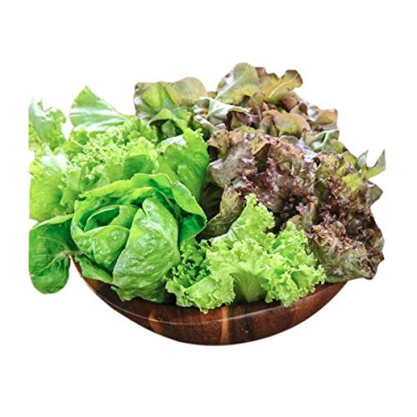 Marde Ross & Company Organic Seed 2 Organic Lettuce Seed Mix of 9 Greens - Mesclun Mix - Fall Crop and Cool Season Planting