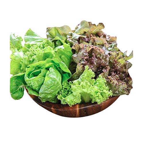 Marde Ross & Company  2 Organic Lettuce Seed Mix of 9 Greens - Mesclun Mix - Fall Crop and Cool Season Planting