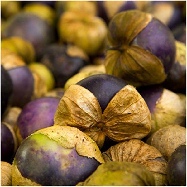 Seed Needs Heirloom Seed 3 Seed Needs, Purple Milpa Tomatillo (Physalis ixocarpa) Twin Pack of 50 Seeds Each Non-GMO