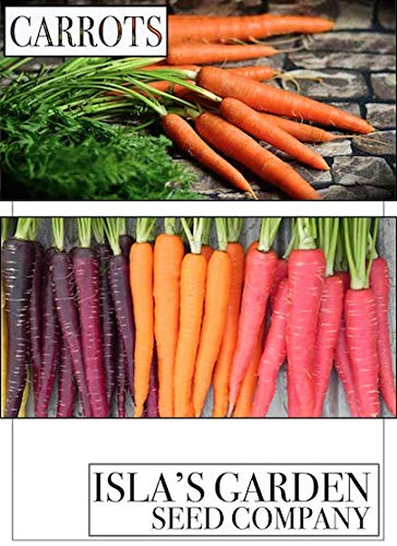 Excellent Carrot! Fantastic Addition to Your Home Garden!