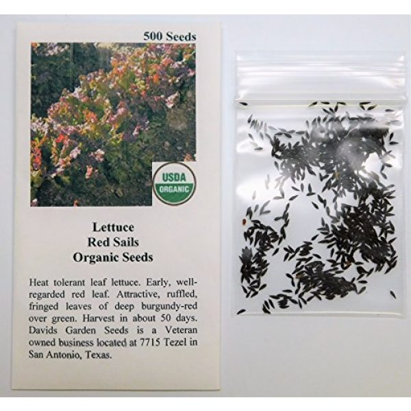 David's Garden Seeds Organic Seed 2 David's Garden Seeds Lettuce Loose Leaf Red Sails SL9988 (Red) 500 Non-GMO, Organic Seeds