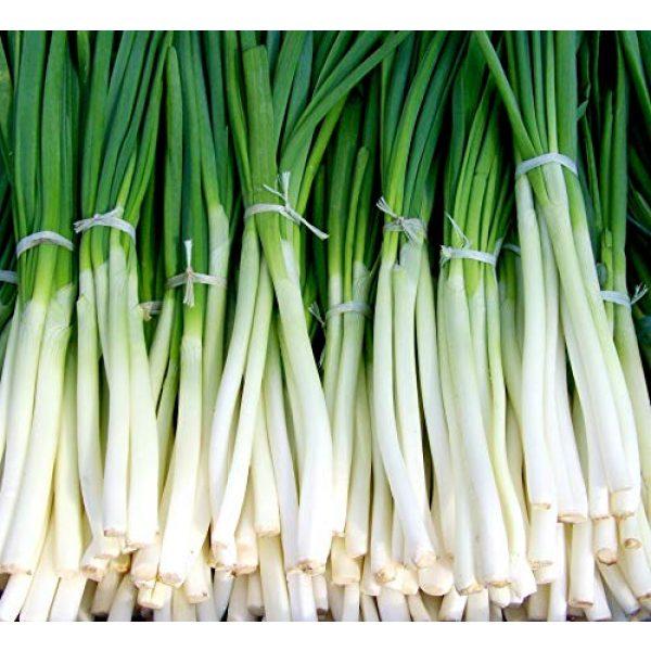 "Liliana's Garden Heirloom Seed 1 Fast-Growing Bunching Onion Seeds -""Ishikura Improved"" - Liliana's Garden - USA Grown Heirloom Seeds"