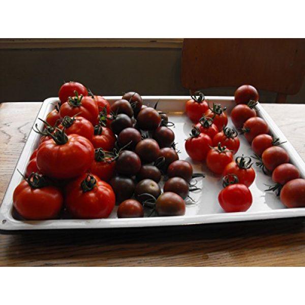 Fertile Ukraine Seeds Heirloom Seed 7 Seeds Cherry Tomato Black Early Vegetable Heirloom Ukraine