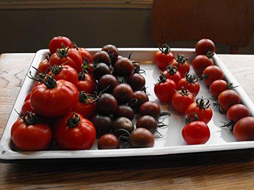 Fertile Ukraine Seeds  7 Seeds Cherry Tomato Black Early Vegetable Heirloom Ukraine